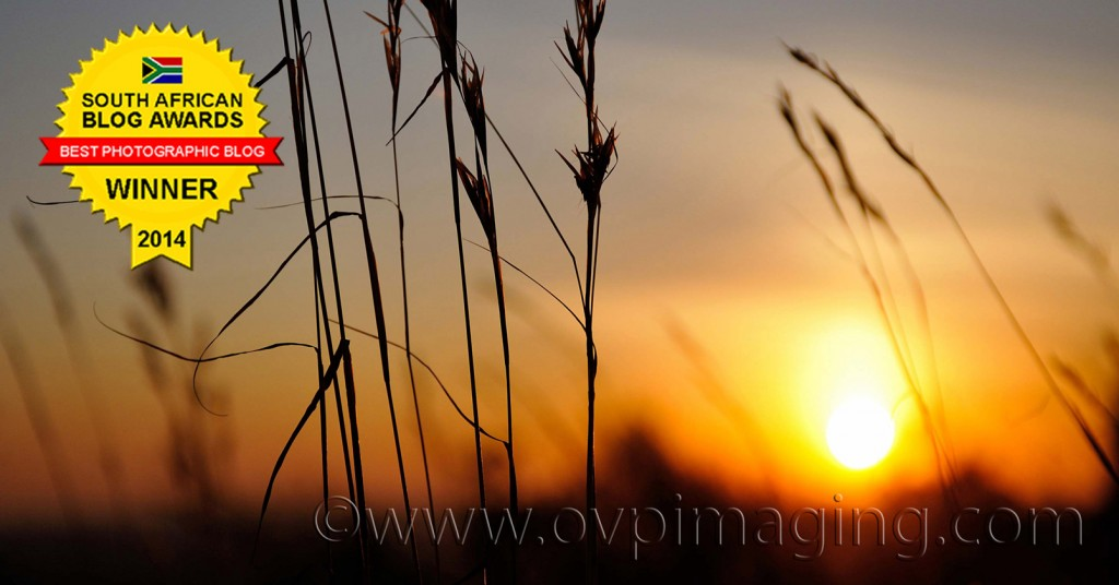 Sunset with silhouette grasses