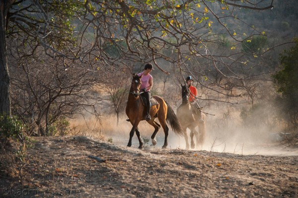 Horse Riding at Ants Nest Game Reserve