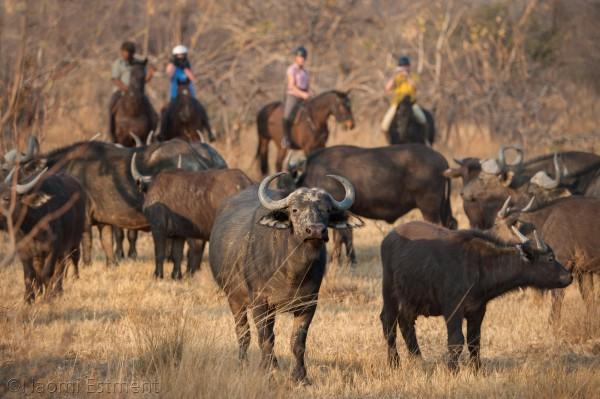 Horse Riders Viewing Buffalo