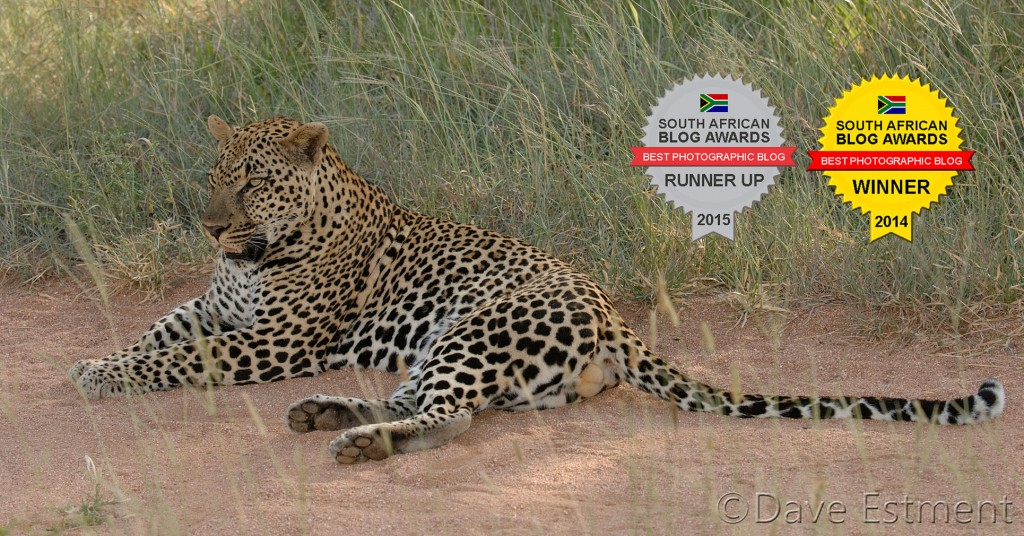 Male Leopard - photographed by Dave Esetment