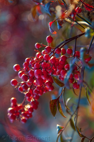 Bunch of Red Berries