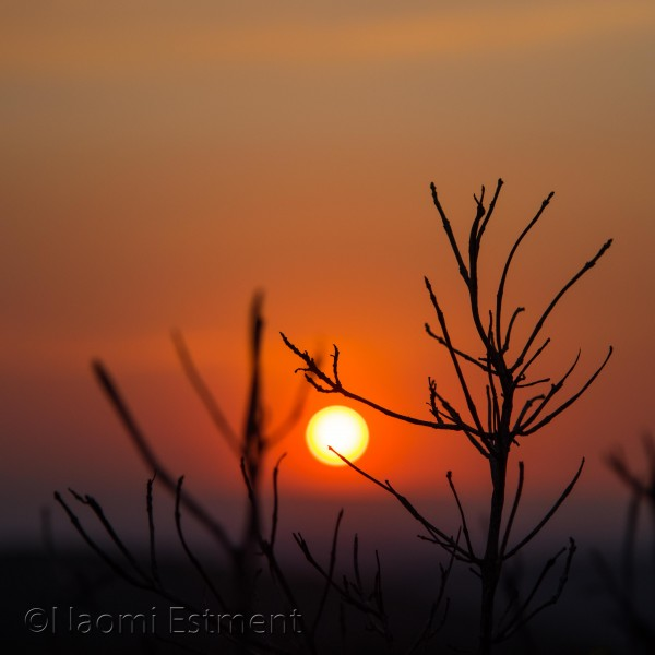 Silhouette of Branches at Sunset